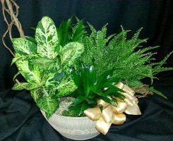 Green Indoor Planter