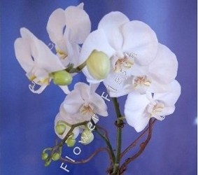 Beautiful Blooming Orchid Plants