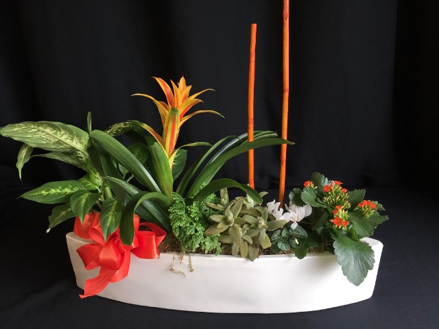 Boat planter bromeliad succulents living plants for Sacramento delivery