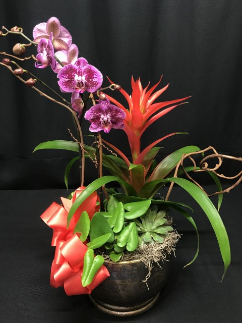 Beautiful Blooming Orchid Plant and tropical combo planter garden