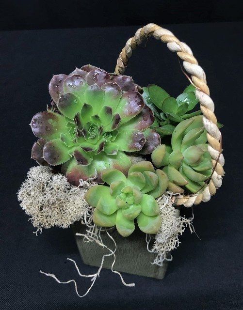 Small Succulent Box with Rope