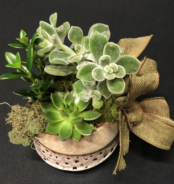 succulent planter brown earthen pot